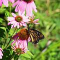 Butterfly 6 by David Stasiak