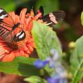 Butterfly 6 by Wesley Farnsworth