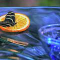 Butterfly 6316 by Tam Ryan