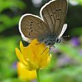 Butterfly 7125 by Murielle Sunier