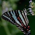Butterfly 8 by Buddy Scott