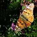 Butterfly 8 by Jean Bernard Roussilhe