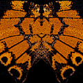 Butterfly Abstract by Jeff Phillippi