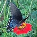 Butterfly And Flower by Debra Lynch