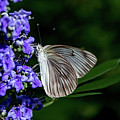 Butterfly And Flower by Jay Stockhaus