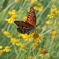 Butterfly And Flowers by Shirley Sykes Bracken