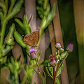 Butterfly And Hoverfly  #h8 by Leif Sohlman
