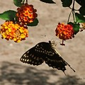 Butterfly And Nature by Judy  Waller