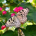 Butterfly And Pink Flower by Judy  Waller