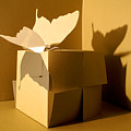 Butterfly And The Cube 1 by Mr ROBOMAN