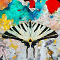Butterfly by Antonella Torquati