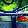 Butterfly At The Gate by Susie Weaver