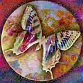 Butterfly by Barbara Berney
