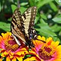 Butterfly Beauty II by Elizabeth Del Rosario-Baker