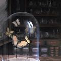 Butterfly Belljar  by Siobhan Cardus