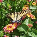 Butterfly Blend by Cathy Klopfenstein