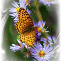 Butterfly Bliss by Marty Koch