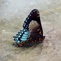 Butterfly Blue On Groovy 2 by Anita Faye