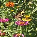 Butterfly Breakfast by Darren Rudd