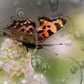 Butterfly Bubbles by Sherman Perry