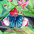 Butterfly Buffet by Mindy Newman