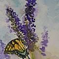 Butterfly Bush by Gretchen Bjornson