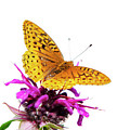 Butterfly by Christina Rollo