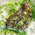 Butterfly Close Up Digital Watercolor On Photograph by Brandon Bourdages