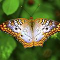 Butterfly Closeup by Randy Aveille