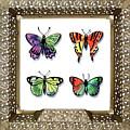 Butterfly Collection II Framed by Irina Sztukowski