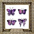 Butterfly Collection IIi Framed by Irina Sztukowski