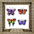 Butterfly Collection Iv Framed by Irina Sztukowski