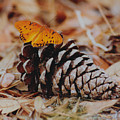 Butterfly Cone by Ron Swonger