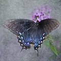 Butterfly Dance by Betty LaRue