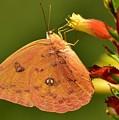 Butterfly Delight by Lisa Renee Ludlum