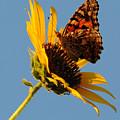 Butterfly Dining by Joe Bonita