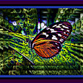 Butterfly Dreams by Leslie Revels