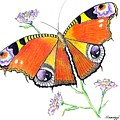 Butterfly Dressed For A Masquerade Ball by Jayne Somogy