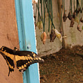 Butterfly Drying His New Wings by Heather Lennox