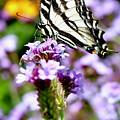 Butterfly  by Erin Finnegan