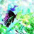 Butterfly Fantasty by Tina LeCour