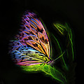 Butterfly Fantasy 2a by Walter Herrit