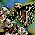Butterfly Fantasy by Lisa Renee Ludlum