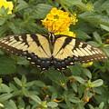 Butterfly by FD Brake