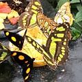 Butterfly Feast  by Natalia Wallwork