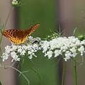 Butterfly Feeding by Debbie Storie