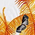 Butterfly Fern by Sweeping Girl