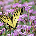 Butterfly Flowers by Christina Rollo