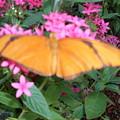 Butterfly Flowers by Warren Thompson