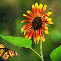 Butterfly Flying To Sunflower  by Paul Wilford